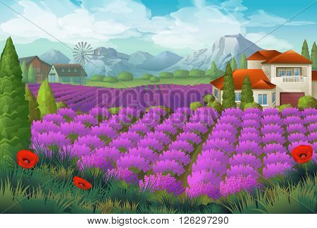 Lavender flowers field. Nature landscape, vector background