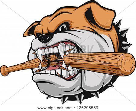 Vector illustration a fierce bulldog breaks a baseball bat, against a white background