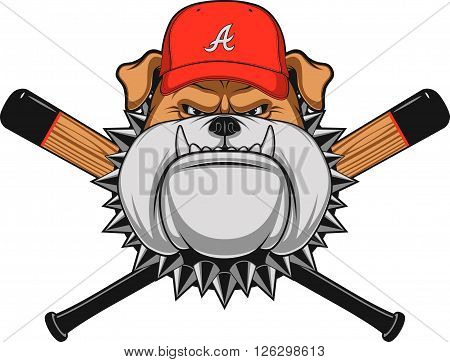 Vector illustration a fierce bulldog wearing baseball cap against a white background
