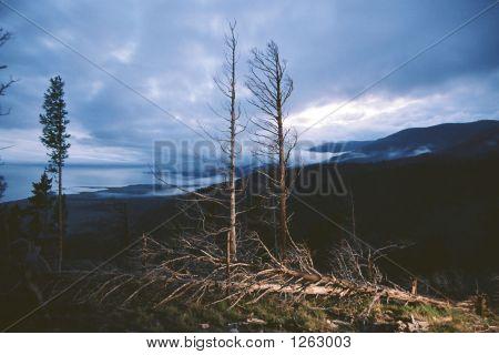 Baykal Coast. 2003.