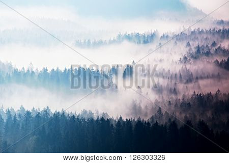 Autumn Sunrise Forest In A Beautiful Mountain Within Inversion. Treetops  Increased From Foggy Backg
