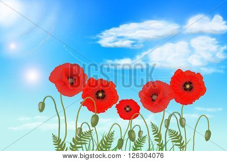 flowers poppies against the sky,  illustration Photoshop