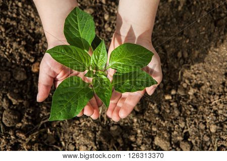 boy hands holding green small plant new life concept.