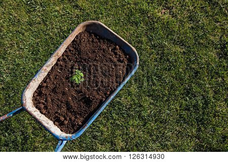gardening trolley full of soil and a plant planted on green grass background