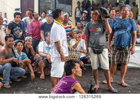 BALI, INDONESIA - FEB 22, 2016: Locals during traditional cockfighting. Cockfighting is a very old tradition in Bali and religious aspects of cockfighting within Balinese Hinduism remain protected.