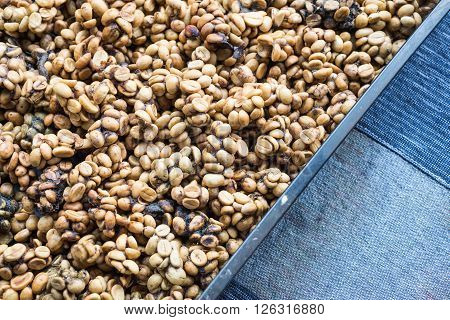 Coffee series : Closeup of coffee beans excreted by civet