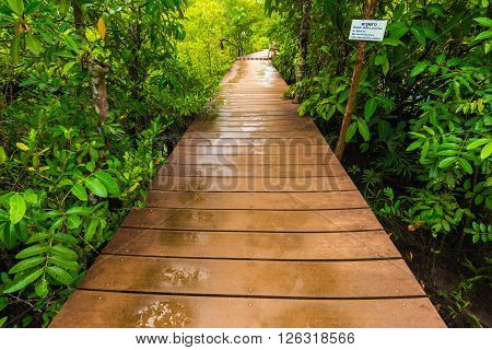 Long Wood Pathway In Mangrove Forest