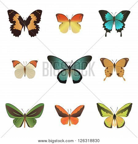 Set of colorful tropical butterfly  isolated on white bacground.