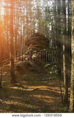 Ancient stone boulder in the forest at the sunrise at Chashkovskoe stone settlement in Southern Urals Russia. Soft focus processing. Forest summer landscape.