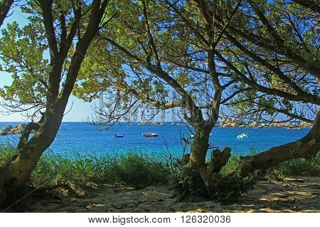 Beach with trees in Brittany at Pontusval, France