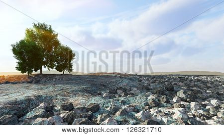 Desert landscape with rocks and trees conceptual composition ** Note: Shallow depth of field