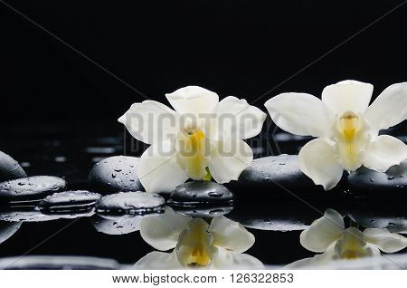 Two orchid blossom with black on wet background