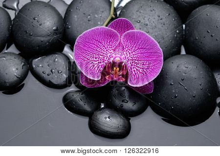Macro of pink orchid on wet black stones