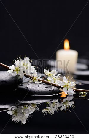 black pebble and candle with cherry blossom