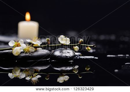 branch cherry blossom with white candle on black stones