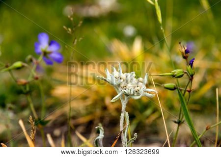 Very Rare and Unique Flower Growing among Green Grass with Blue Purple Plants on Blurred Background