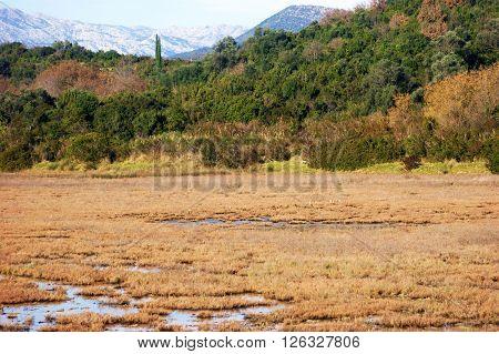 Nature saltmarsh near city of Tivat (Montenegro)
