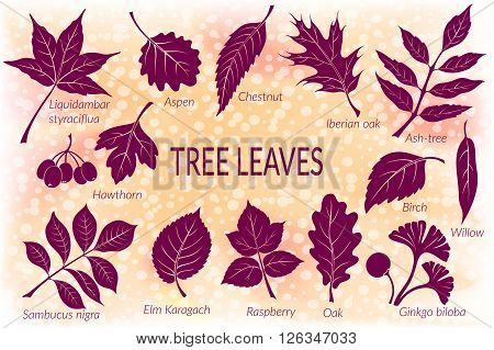 Pictograms Set, Tree Leaves, Oak, Iberian Oak, Raspberry, Willow, Liquidambar, Hawthorn, Aspen, Ginkgo Biloba, Elm Karagach, Birch, Ash, Chestnut and Sambucus. Eps10, Contains Transparencies. Vector