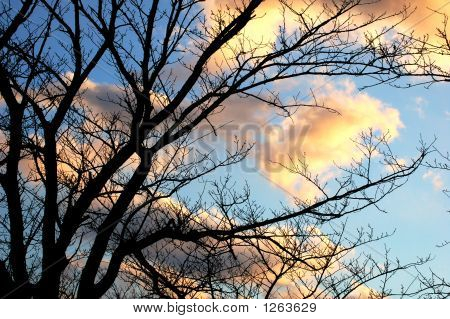 Dramatic Winter Tree Silhouette