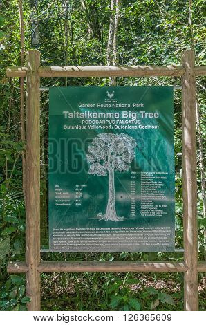 STORMS RIVER SOUTH AFRICA - FEBRUARY 28 2016: Information board at the 1000 year old yellowwood tree in the Tsitsikama Forest near Storms River in the Eastern Cape Province