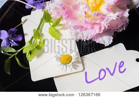 tulip violet and daisy with card Love