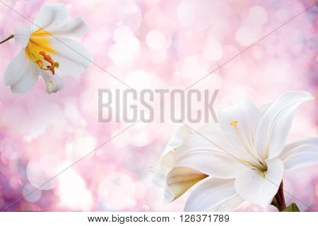 Flowers background with lily.Spring Flowers