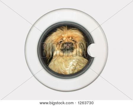 Dog In Washing Machine