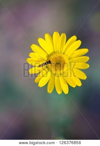 Small Wasp Sitting On Flower