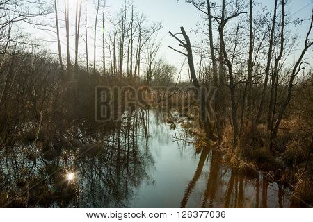 A calm creek in a swamp landscape with late sunlight ** Note: Soft Focus at 100%, best at smaller sizes