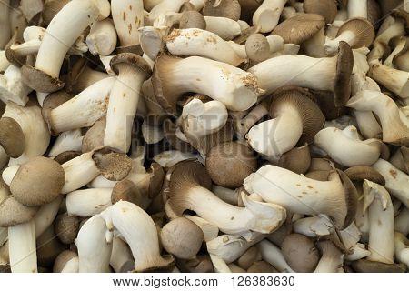 Fresh raw king oyster mushrooms full frame