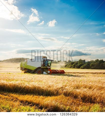 Working Harvesting Combine in the Field of Wheat. Farmland Background. Agriculture Concept. Toned and Filtered Photo with Copy Space.