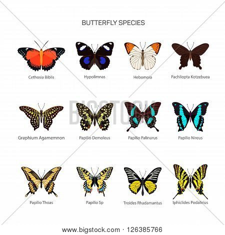 Butterflies vector set in flat style design. Different kind of butterfly species icons collection. Isolated on white background.