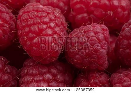 Extreme close-up background from many  juicy raspberries