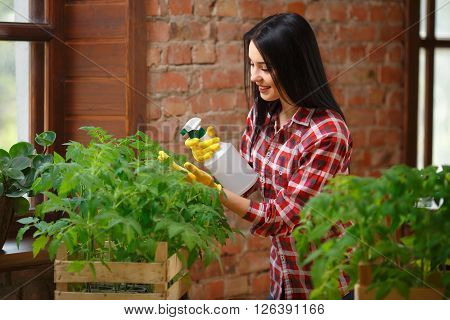 Plants need water. Shot of a cheerful young female spraying her tomato seedlings with water.