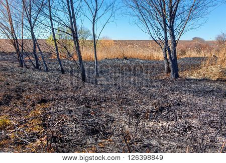 burned plants and trees after natural disaster