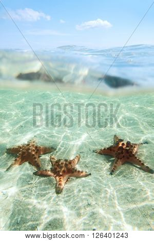 Split image of tree starfishes underwater, sunny day, blue sky