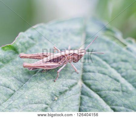 Grasshopper Sitting On Plant