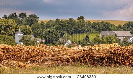 Stacks Of Wood Timber Trunks Panorama