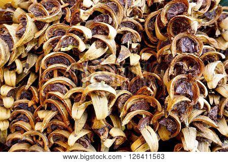 Dry Betel Nuts Thai Texture