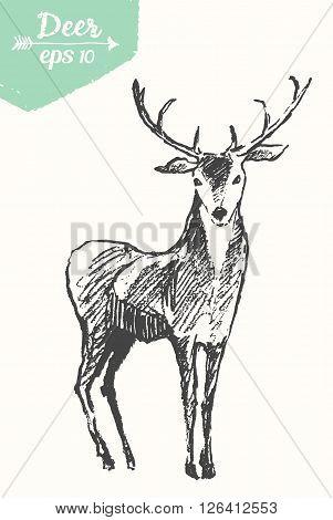 Sketch of a deer, vintage illustration, hand drawn, sketch