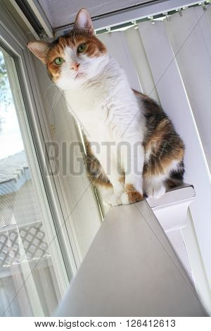 Perching Calico Cat (Calico cat perched on a white wooden bed frame).