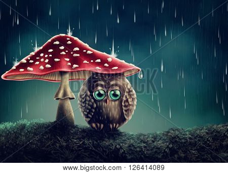 Little owl sitting under mushrooms