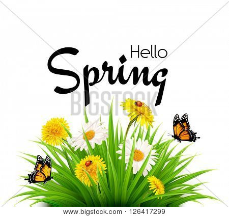 Hello Spring background with dandelions, daisies and butterflies. Vector.