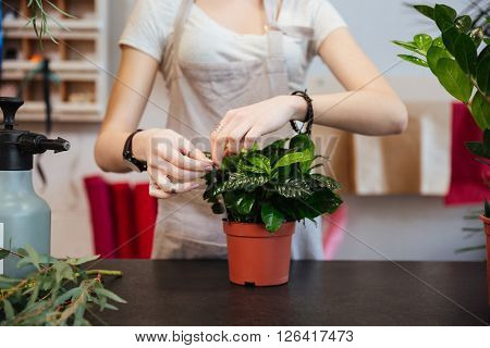 Closeup of young woman florist taking care of plant in flowerpot in flower shop