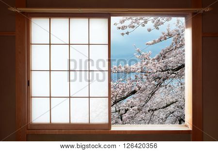 Traditional Japanese sliding window and beautiful cherry tree blossoms