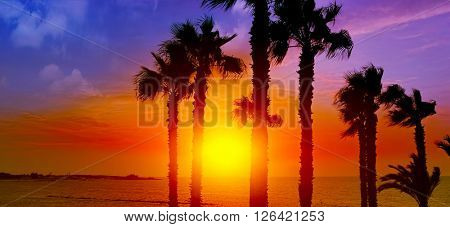 Palm tree silhouette on paradise sunset on the beach