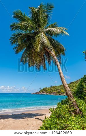Idyllic paradise palm Anse Mayor beach on the North-West side of Mahe Island near the town of Bel Ombre Seychelles.
