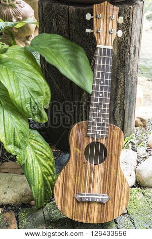 Ukulele on garden background, small guitar on garden