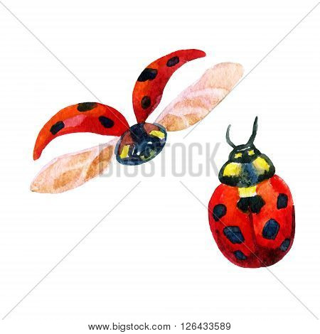 Set of two watercolor ladybugs isolated on white background. Hand painted illustration