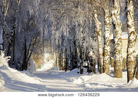 Trees covered with snow in the birch alley of the Park.